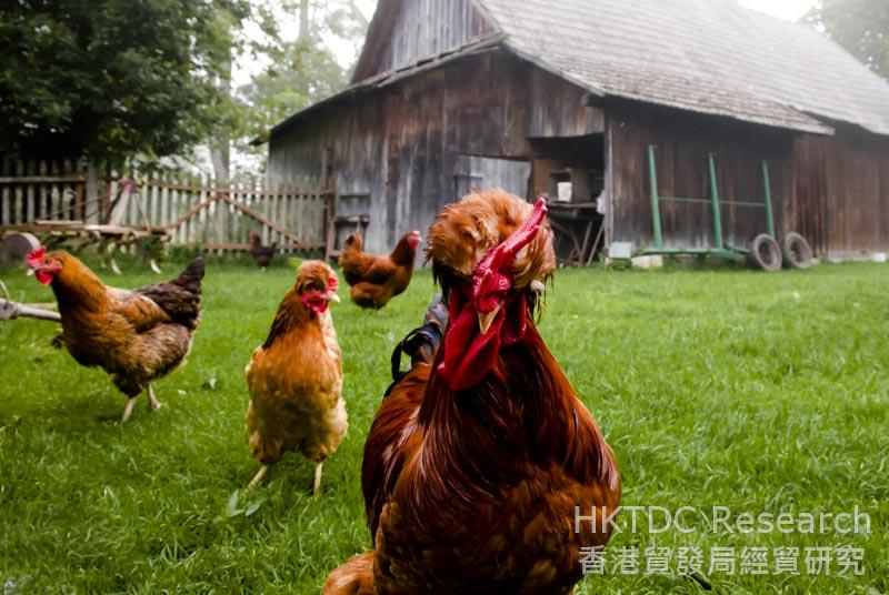 Photo: Polish poultry: Flu-free and hopefully mainland-bound. (Shutterstock.com)