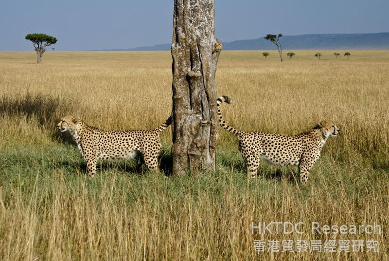 Photo: Safari appeal: Kenya's top tourism lure. (Shutterstock.com)