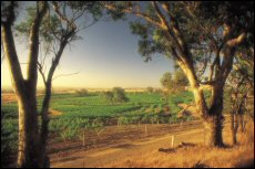 South Australia's premier wine region, the Barossa Valley, is set for more exposure in Greater China
