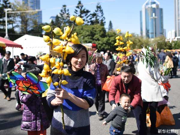 照片:广州市民在天河花市购买年花。(新华社)