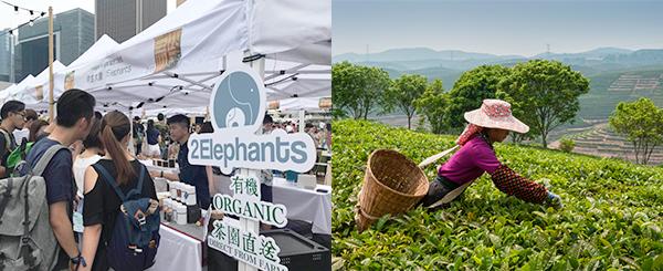 两只大象茶文化公司
