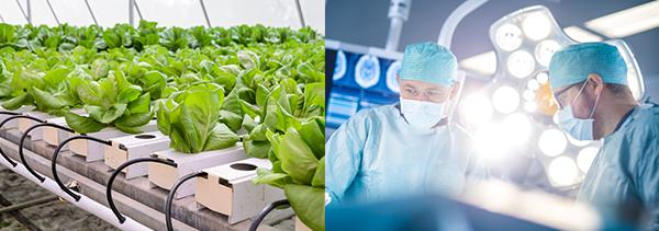 医疗保健、粮食及农业