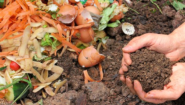 廚餘分解為堆肥