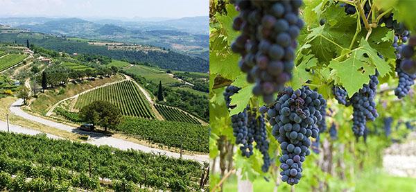 瓦波里切拉莊園及葡萄