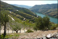 More wines from Portugal's Sogrape's vineyards in Quinta do Seixo in Douro Valley are likely bound f