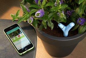 Parrot's Flower Power plant sensor