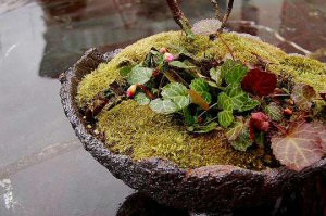 Heritage herbiage: Kokedama