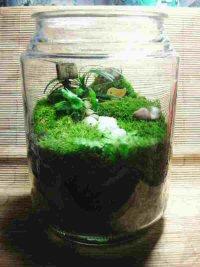 Foliage filled: a garden in a jar