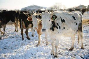Frozen yoghurt on draught in Russia's Far East