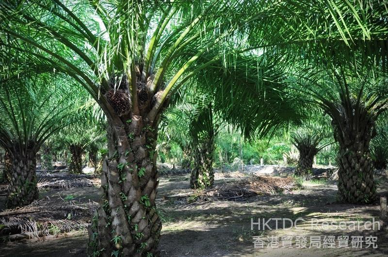 相片:聚龙集团往海外投资种植产业(二)