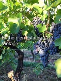 Photo: Rutherglen Estates 2017 Vintage.